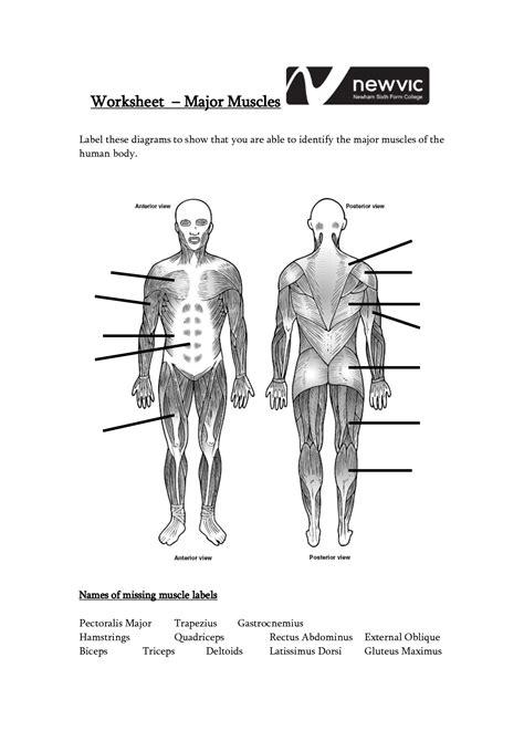 Worksheet Muscle Anatomy Worksheet Grass Fedjp Worksheet Study Site