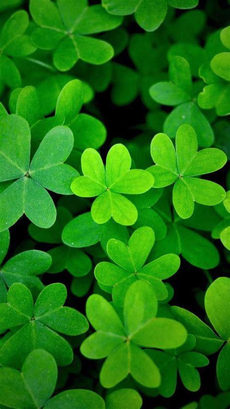 代表幸运的三叶草、四叶草唯美美图图片(3)_优美图