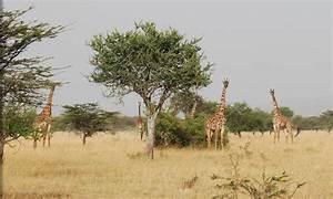 Habitat - Giraffe central