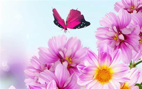 bunga merah muda pink bunga nusantara