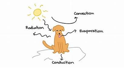 Adaptation Biology Homeostasis Animals Example Territory Capital