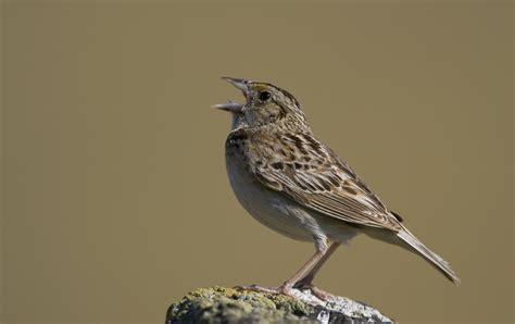 making a good home for grasshopper sparrows audubon
