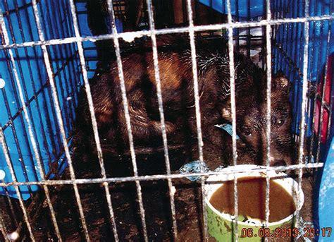 florida couple charged  animal abuse child neglect