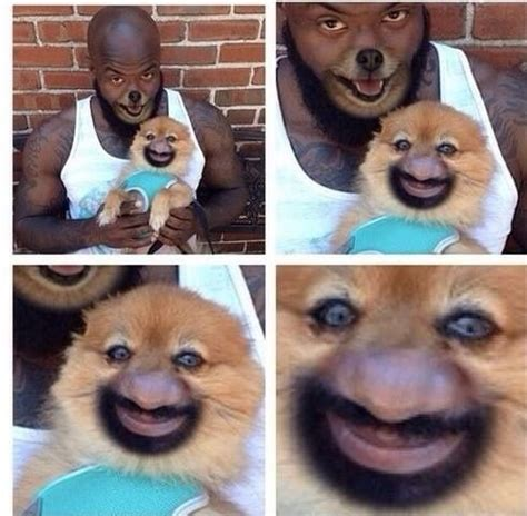 Puppy Face Meme - human dog face swap meme collection