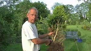 Buchsbaum Schneiden Formen : buchsbaum buxus boxwood eine neue form entsteht youtube ~ A.2002-acura-tl-radio.info Haus und Dekorationen
