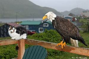 Crazy! She Finds Cat, Bald Eagle, and Red Fox Chillaxing ...