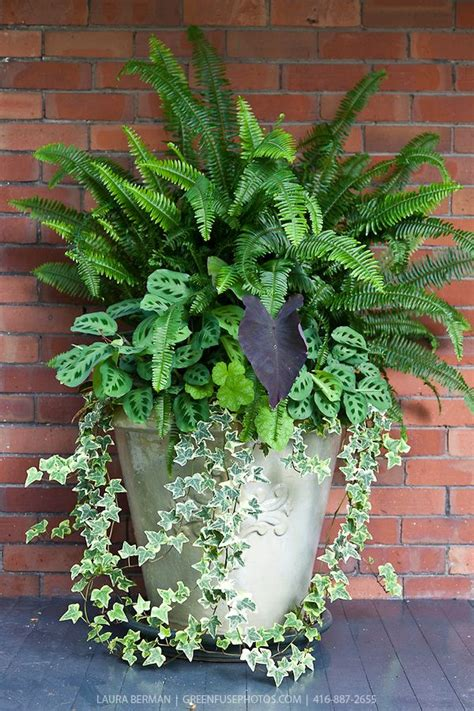 ferns in planters ivy ferns and other tropical plants in a tall white stone pot against a red brick wall