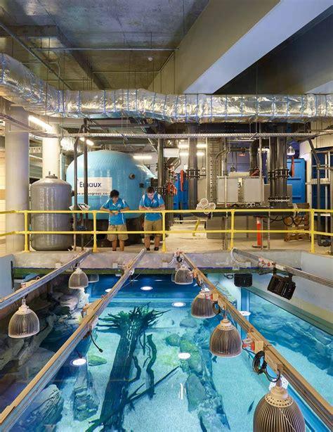 illuminazione per acquari illuminazione a led per la pubblica acquario orphek