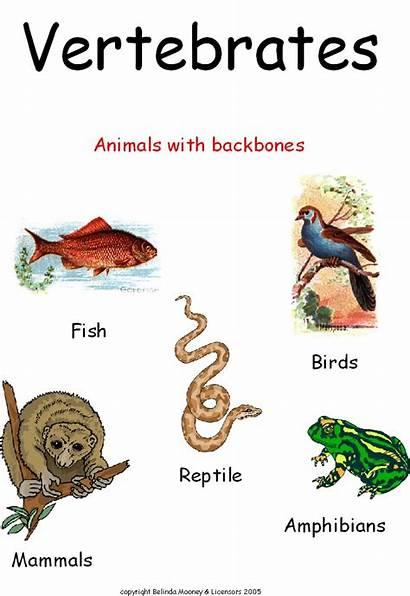 Invertebrate Animals Vertebrate Clase Nuestra Cosas