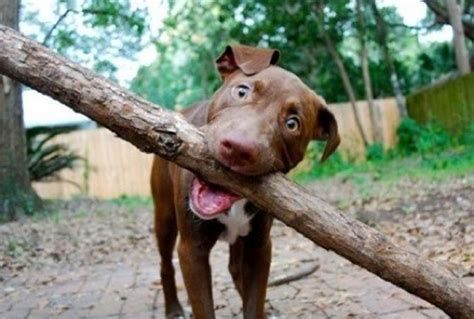 dogs  big sticks endearingly complicate  simple