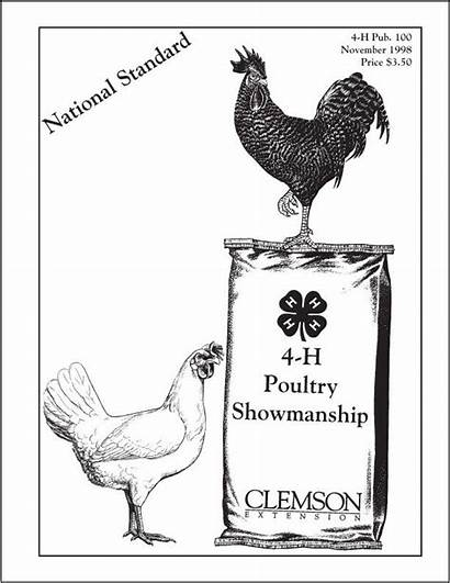 4h Poultry Chicken Showmanship Chickens Pen National