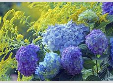 Ten Tips for Successfully Designing Your Flower Garden