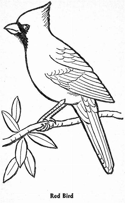 Coloring Birds Winter Pages Cardinal Printable Getcolorings