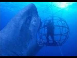 Real GIANT MEGALODON Found! - The BIGGEST Shark Ever - YouTube
