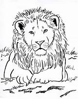 Lion Coloring sketch template