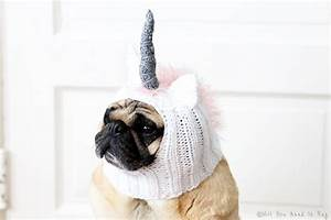 Halloween Dog Hat Order Update - All You Need Is Pug