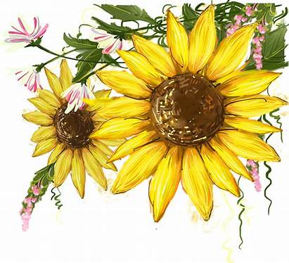 Sunflower Clipart Watercolor Clip Common Library Svg