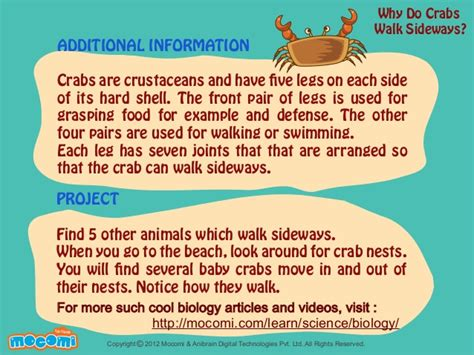 why do crabs walk sideways mocomi 594 | why do crabs walk sideways mocomicom 4 638