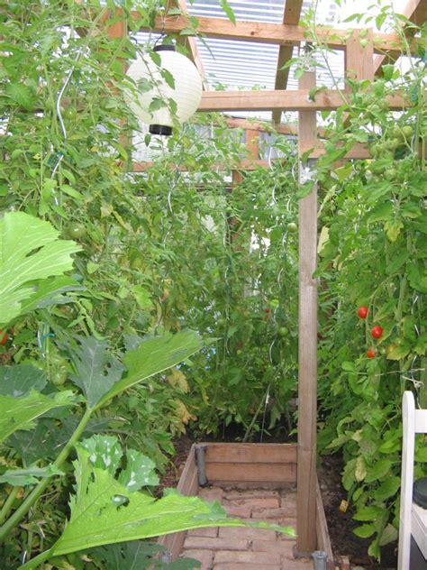 gurken und tomaten im gewächshaus gurken samen alte sorten gurken und cornichons gurken 2 alte sorten aus albanien salatgurken