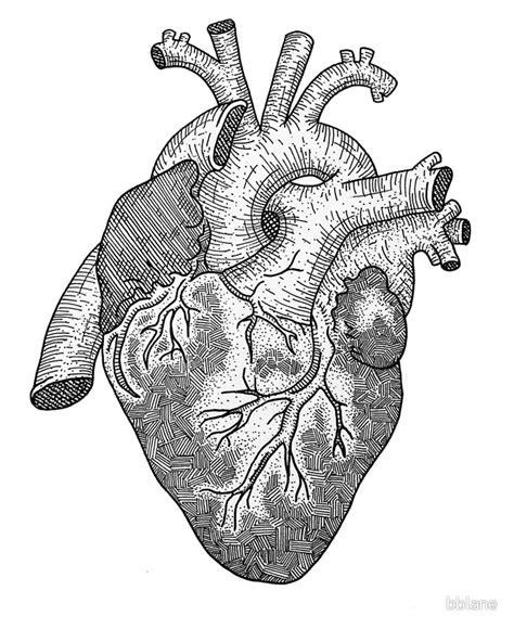 anatomical heart ink illustration  bblane redbubble