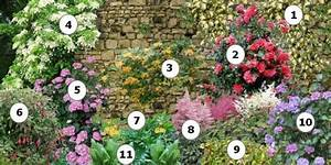 Comment Planter Un Camélia : comment fleurir un mur au nord 1 lierre panach 2 cam lia 3 ch vrefeuille x tellmaniana 4 ~ Melissatoandfro.com Idées de Décoration