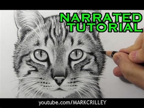 draw  cat narrated step  step tutorial youtube