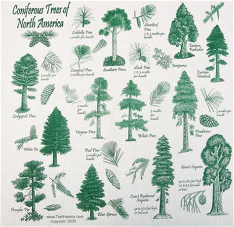 Christmas Tree Types Usa by Coniferous Trees Bandana Hankie