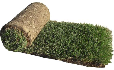 Grass Clipart Transparent Background