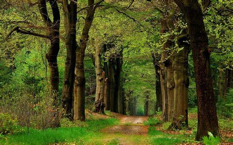 bosque hierba carretera plantas camino fondos de pantalla