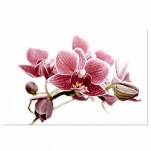 gousicteco: Orchid Art Images