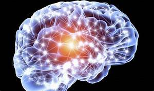 Top 10 Facts About The Brain
