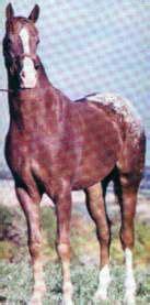 tvg racing form first secretary first son of secretariat horse racing