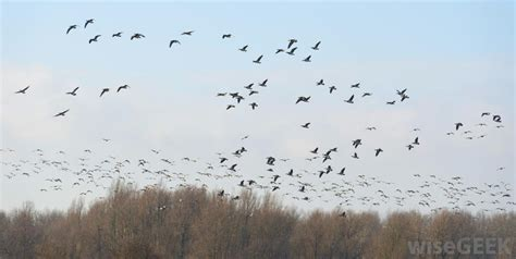 best 28 which birds fly south for the winter birds