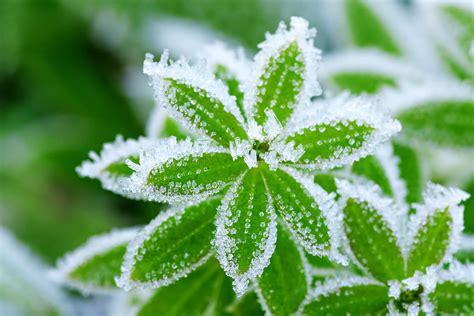 Winterharte Pflanzen Kübel by Winterharte Pflanzen Diese Pflanzen 252 Berleben Die Kalte