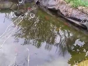 Goldfisch Haltung Im Teich : goldfische im teich beim laichen teil 3 youtube ~ A.2002-acura-tl-radio.info Haus und Dekorationen