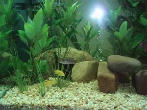 Cheap Aquarium Decorations - Decor IdeasDecor Ideas
