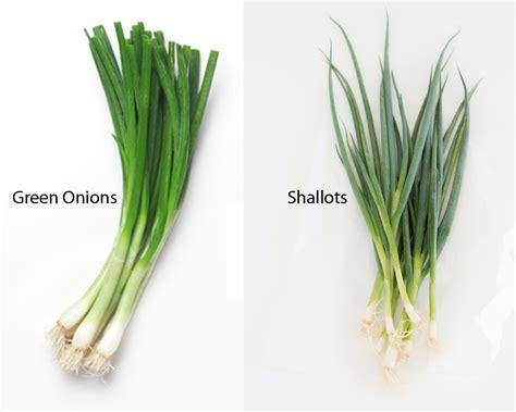cuisine recipes green onions vs shallots thosefoods com