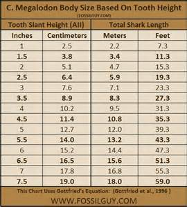 Megalodon Shark Tooth Size Chart