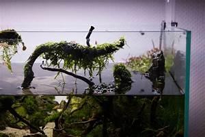 Aquarium Ohne Wasserwechsel : aquarium schlauch wasserwechsel wasserwechsel aber ohne am schlauch ansaugen zu m ssen youtube ~ Eleganceandgraceweddings.com Haus und Dekorationen