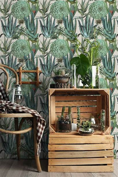 Mind Gap Succulentus Succulents Wallpapers Succulent Mindthegap