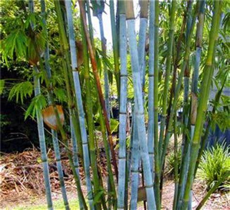 empire flooring orem utah unique bamboo plants 28 images shop popular bamboo