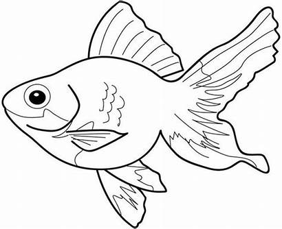 Fish Realistic Coloring Pages Printable Getcolorings