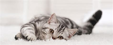 katzen op versicherung jetzt abschliessen