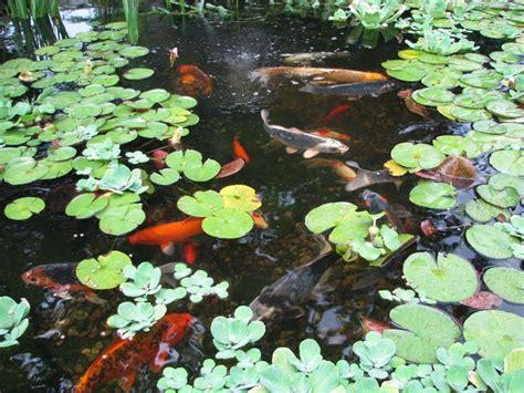 Aquascape Nj by Summer Pond Maintenance South Jersey Camden