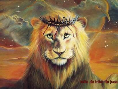 Leao Judah Majesty Pg84 Excepcional