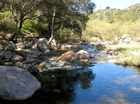 Photos From Elfin Forest Hike