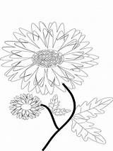 Coloring Pages Flower Marigold Flowers Marigolds Printable Colors sketch template