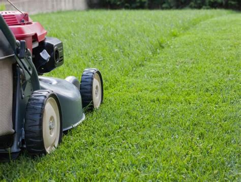 lawn mowing townsville  create immaculate lawns