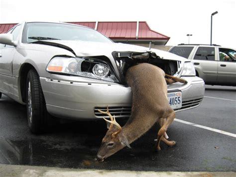 honey    hot   deer deer hunting