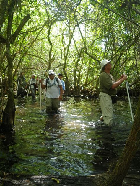 corkscrew swamp walks audubon corkscrew swamp sanctuary